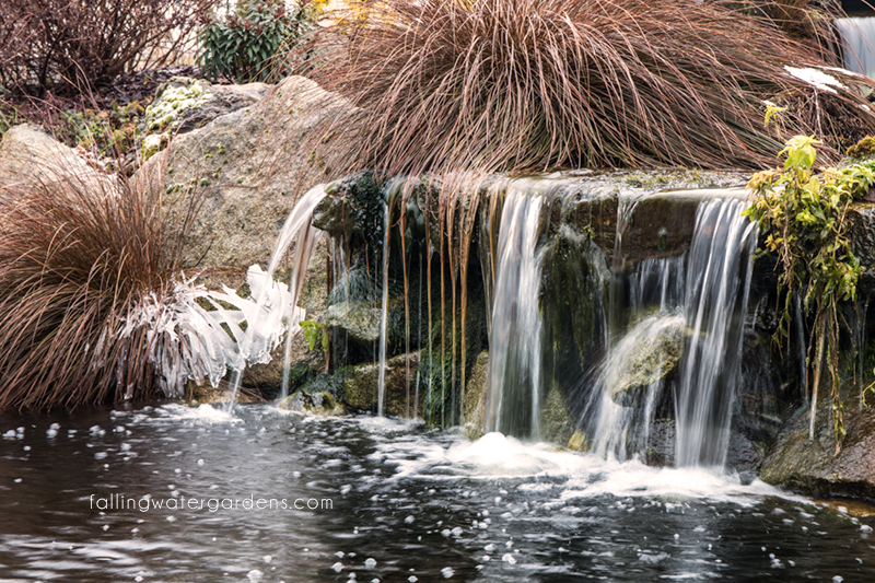 Falling water designs pond and fish care during freezing for Koi pond freezing