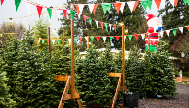 Christmas Tree lot at Falling Water Gardens in Monroe, Washington