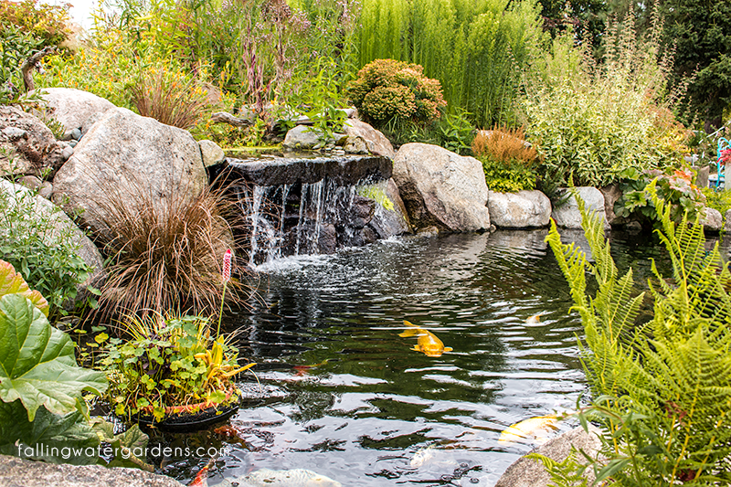 Falling Water Designs 2016 May Newsletter Page 7 Of 7 Falling Water Designs